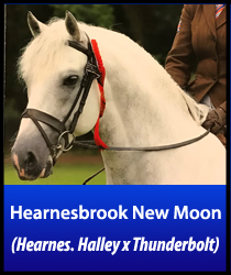 Hearnesbrook New Moon