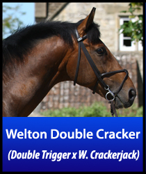 Welton Double Cracker